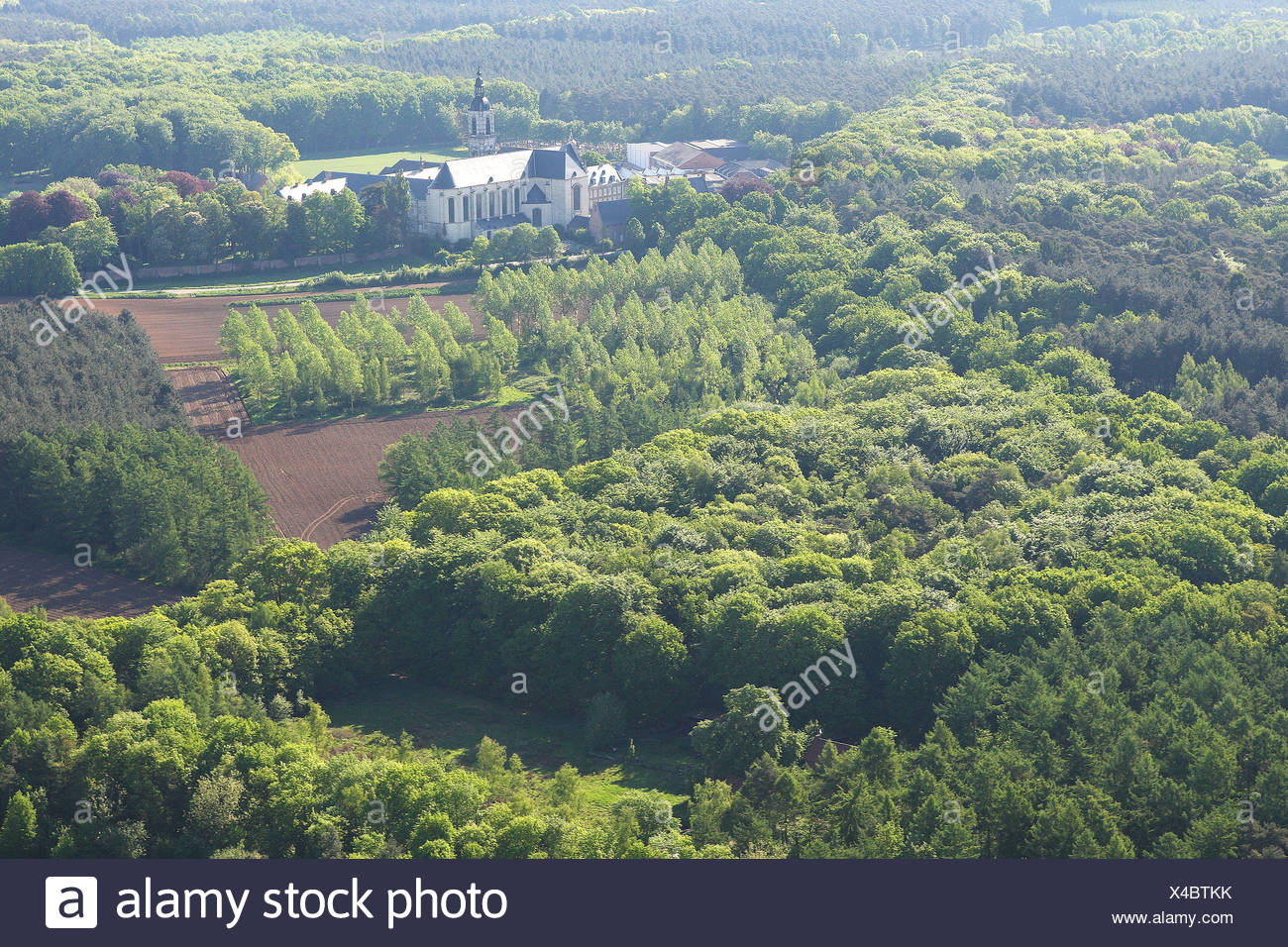 Bos vanuit de lucht, Belgi Mixed forest from the air, Belgium - Stock Image