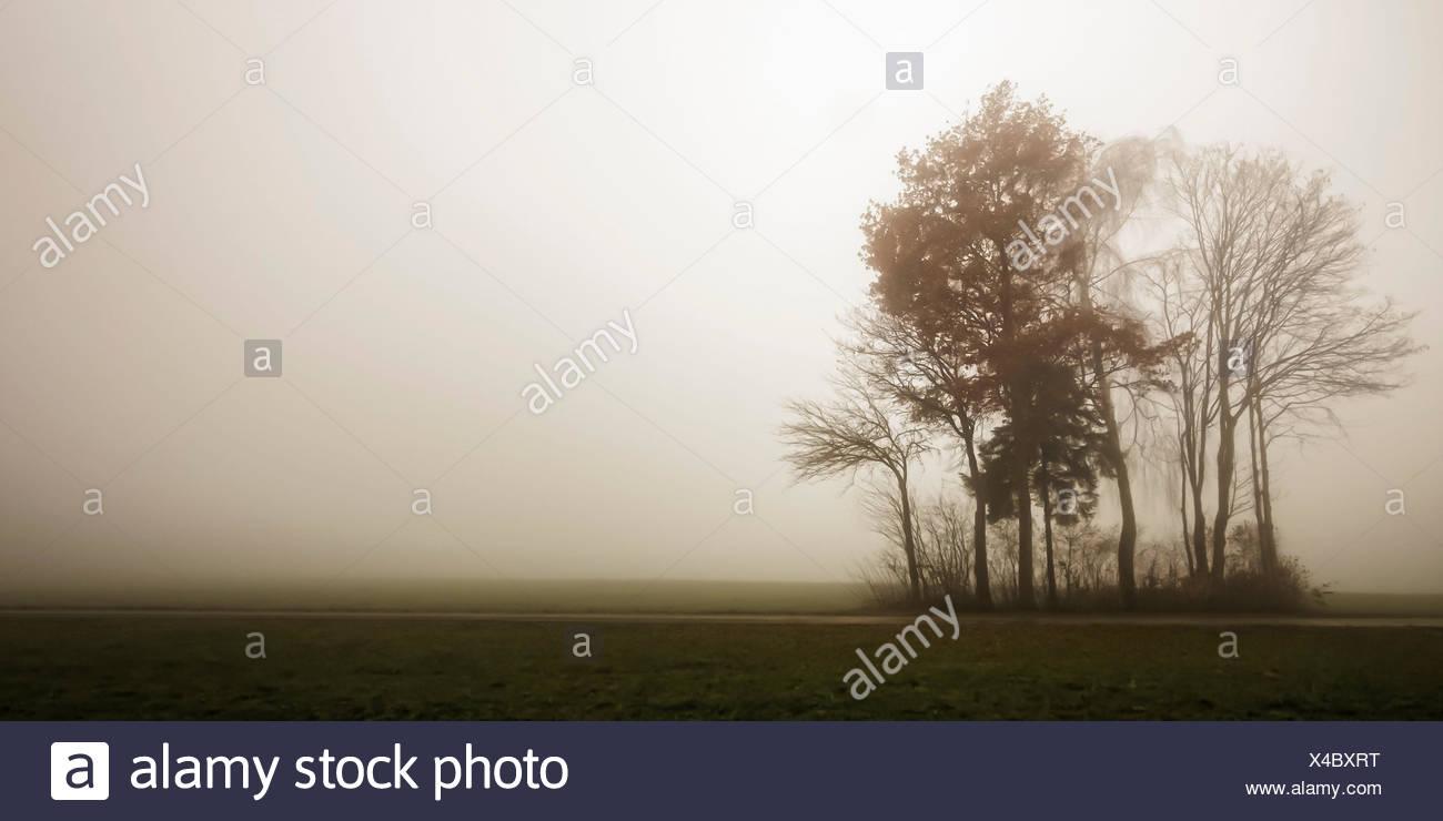 Germany, Bavaria, Allgäu, Irsee, trees, fog, hopeless, scenery - Stock Image