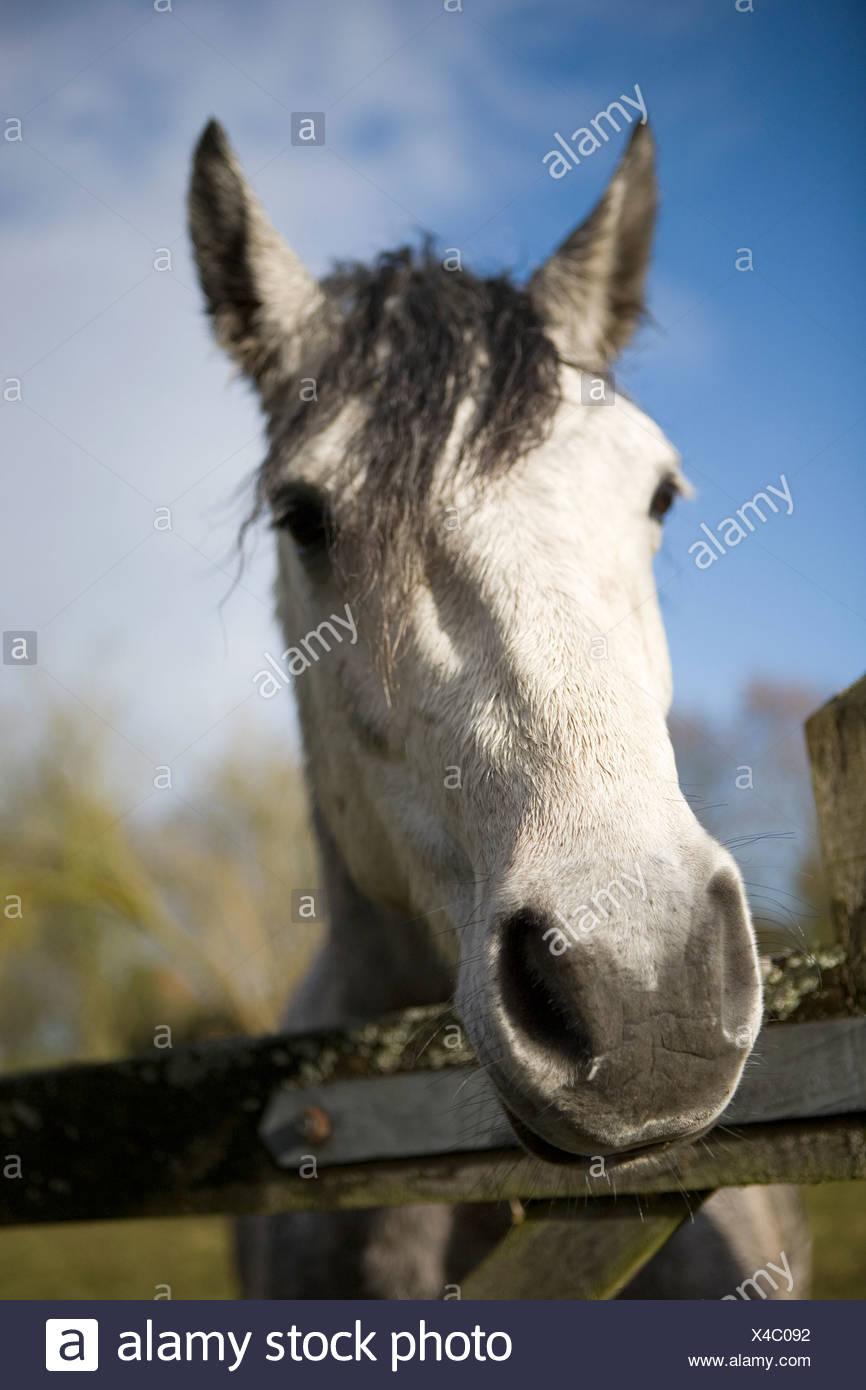 Horse head - Stock Image
