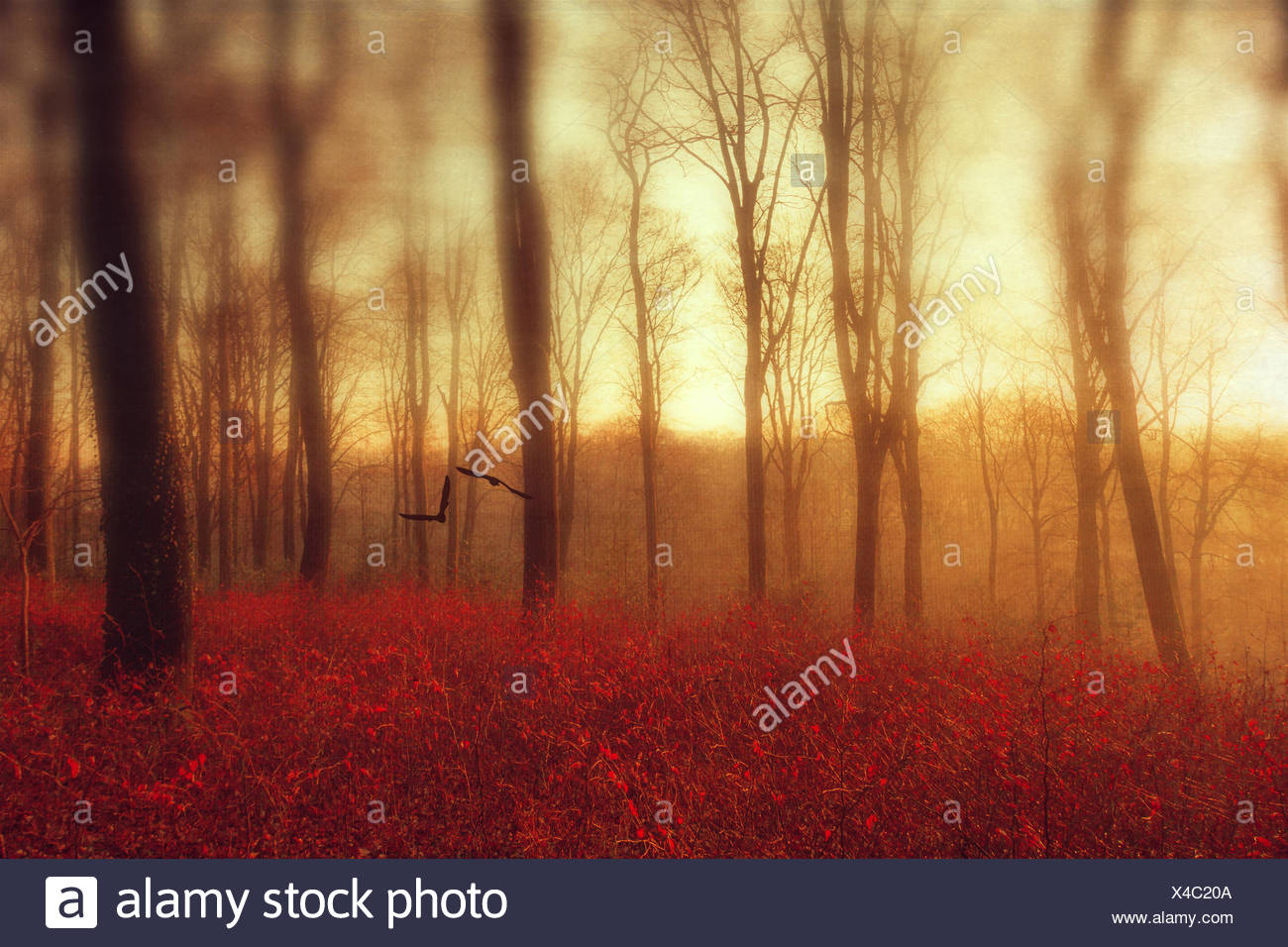 Autum forest and flying birds, digitally manipulated - Stock Image