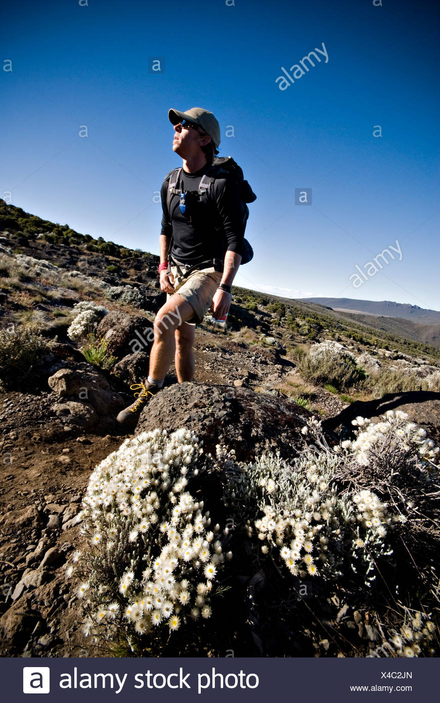 A young man hikes near alpine flowers in the high desert below Mt. Kilimanjaro. - Stock Image