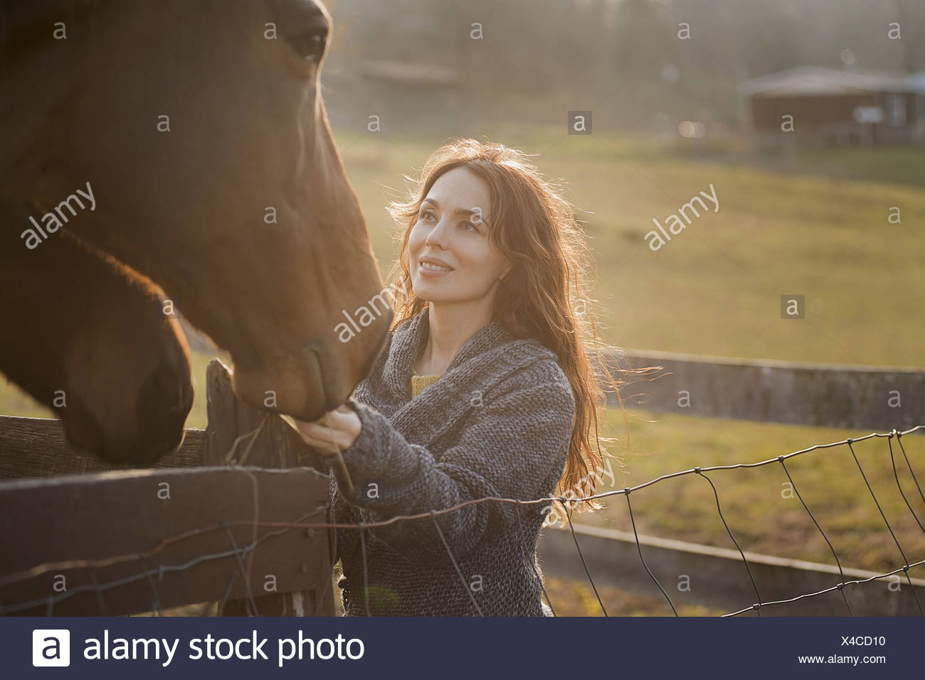 A woman stroking the muzzles of two horses in a paddock on an organic farm - Stock Image