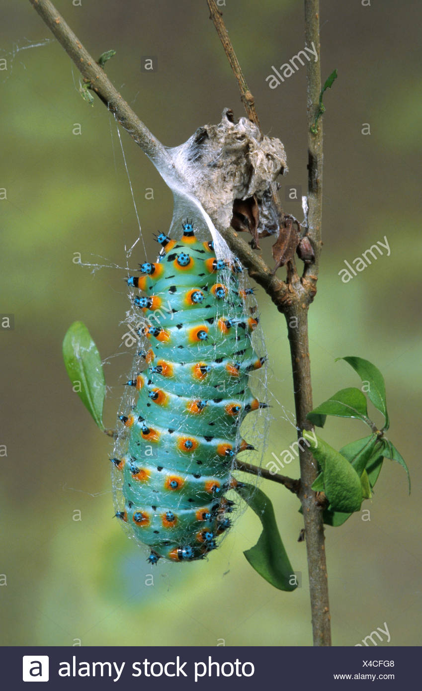 Opinion, you Australia caterpillar found giant xxx mine, someone