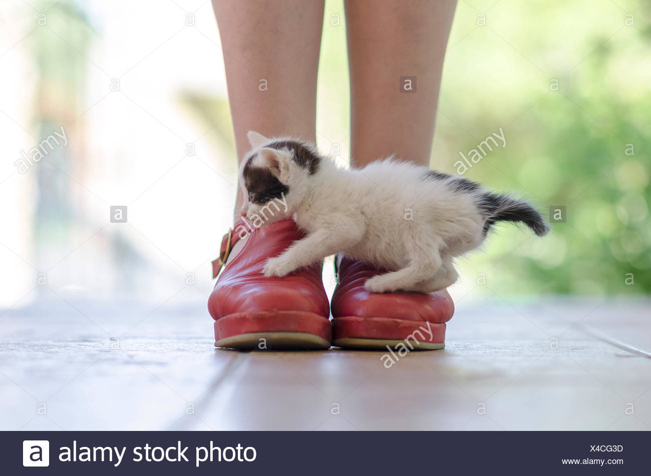 Kitten over Red Shoes - Stock Image