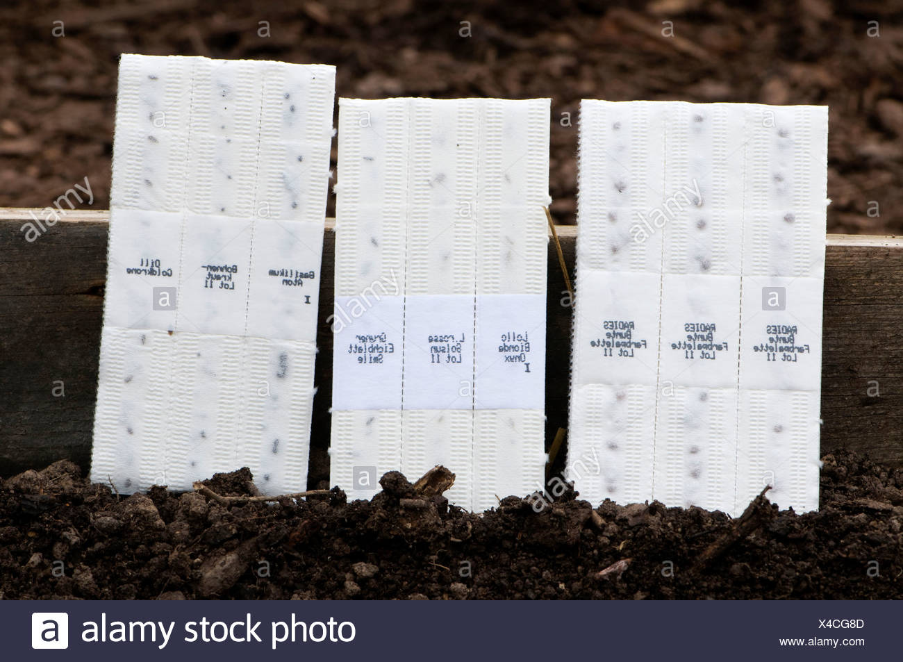 Strips of paper with seed / sowing - Stock Image