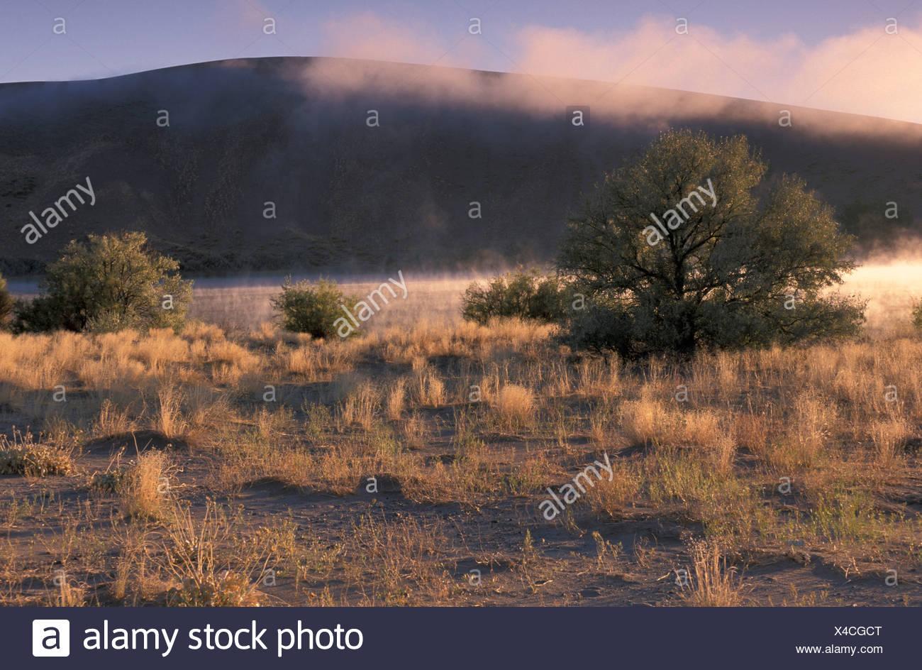 scenery lake shore nebulous scrap sand dune dune Bruneau Dunes State park Idaho USA United States America - Stock Image