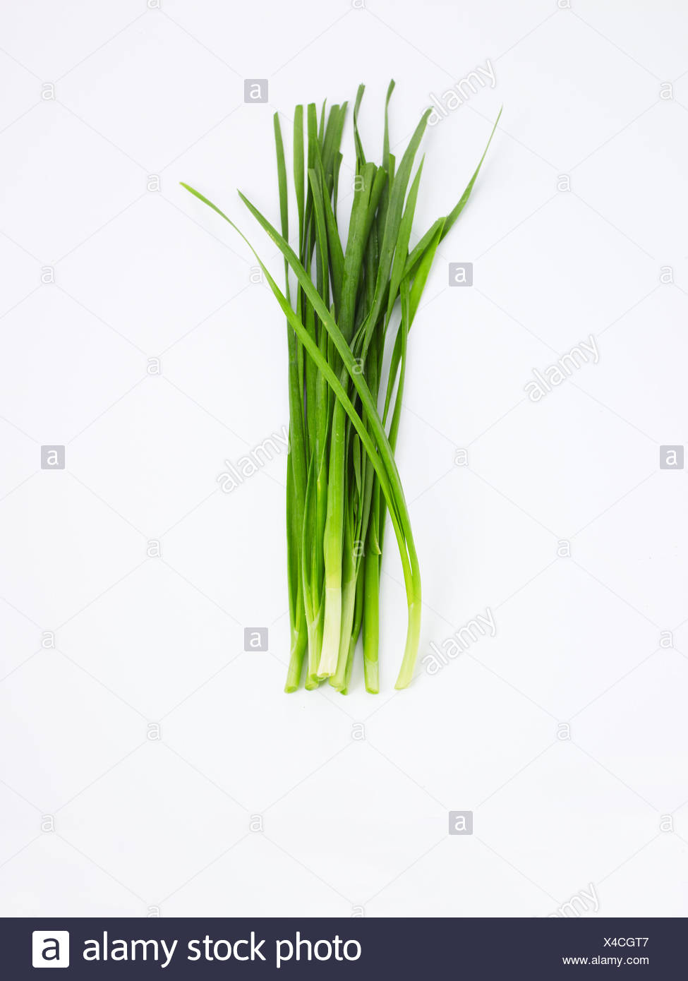 Garlic Chives on white background - Stock Image