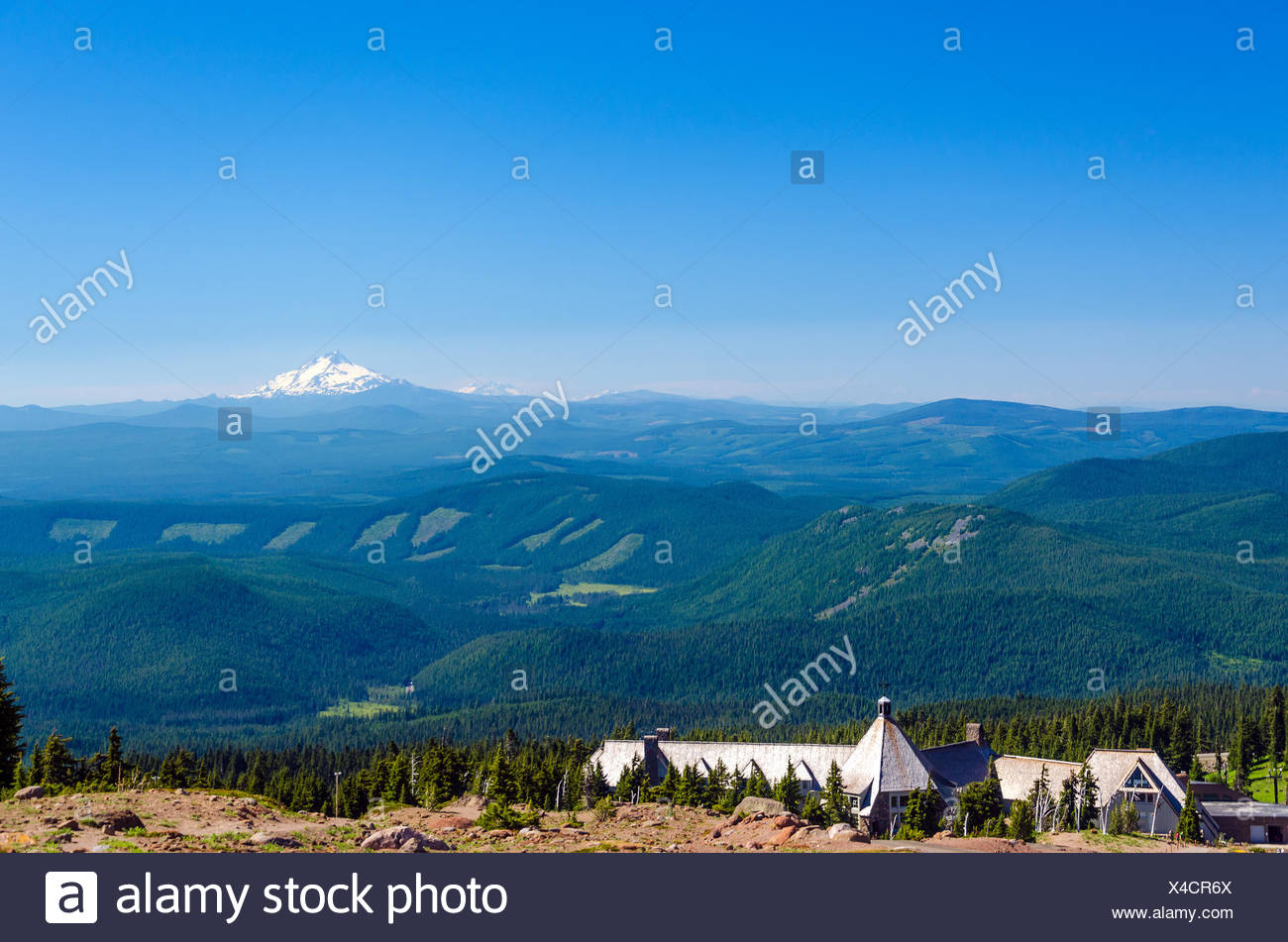 blue tree trees hill pine snow coke cocaine material drug anaesthetic addictive drug summit summer summerly tip peak evergreen - Stock Image