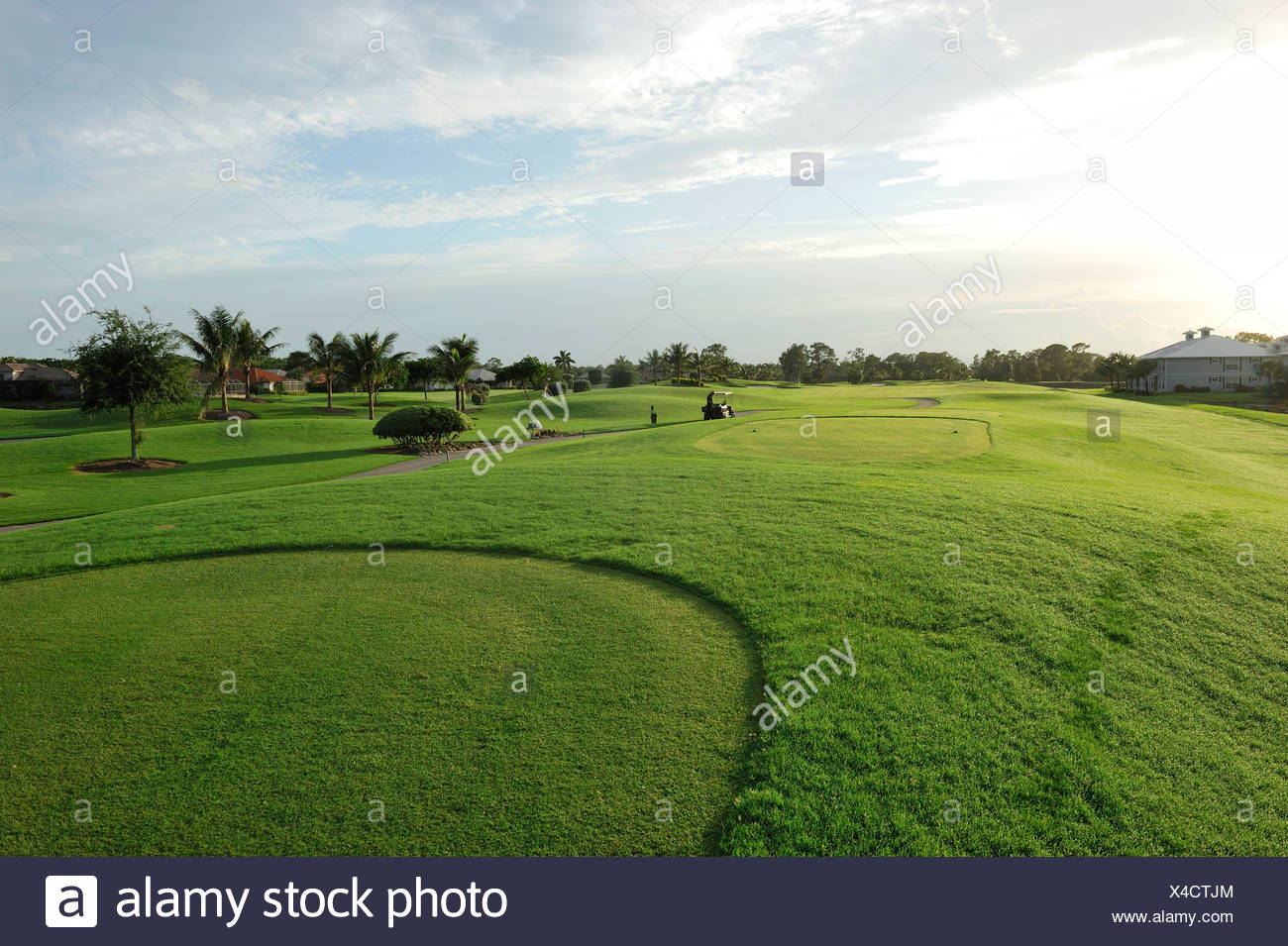 Flamingo Golf Course, golf, Lely Resort, Naples, Florida, USA, United States, America, green, grass - Stock Image