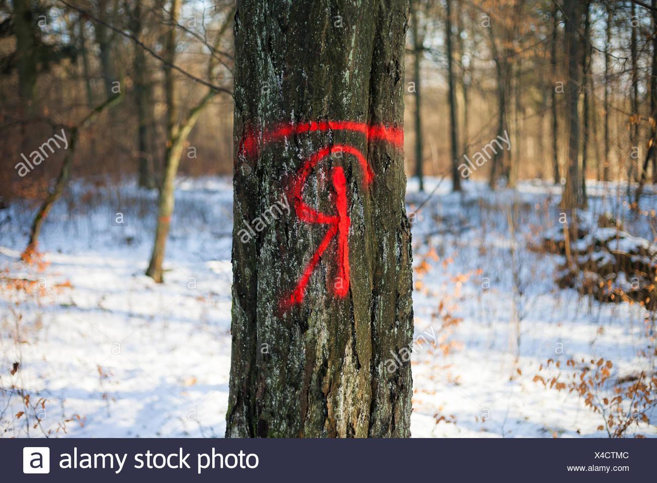 Wald Forstwirtschaft Stock Photo