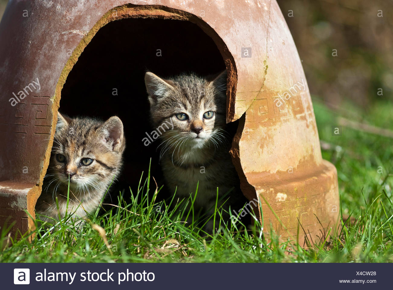 how to get a cat out from under the house