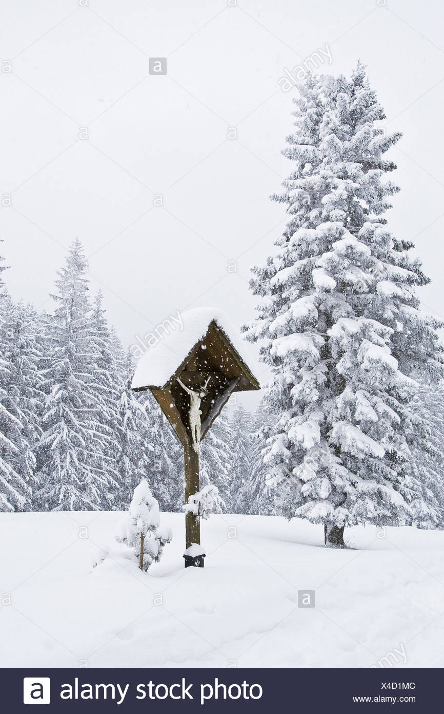 Forest, conifers, wooden cross, snow-covered, - Stock Image