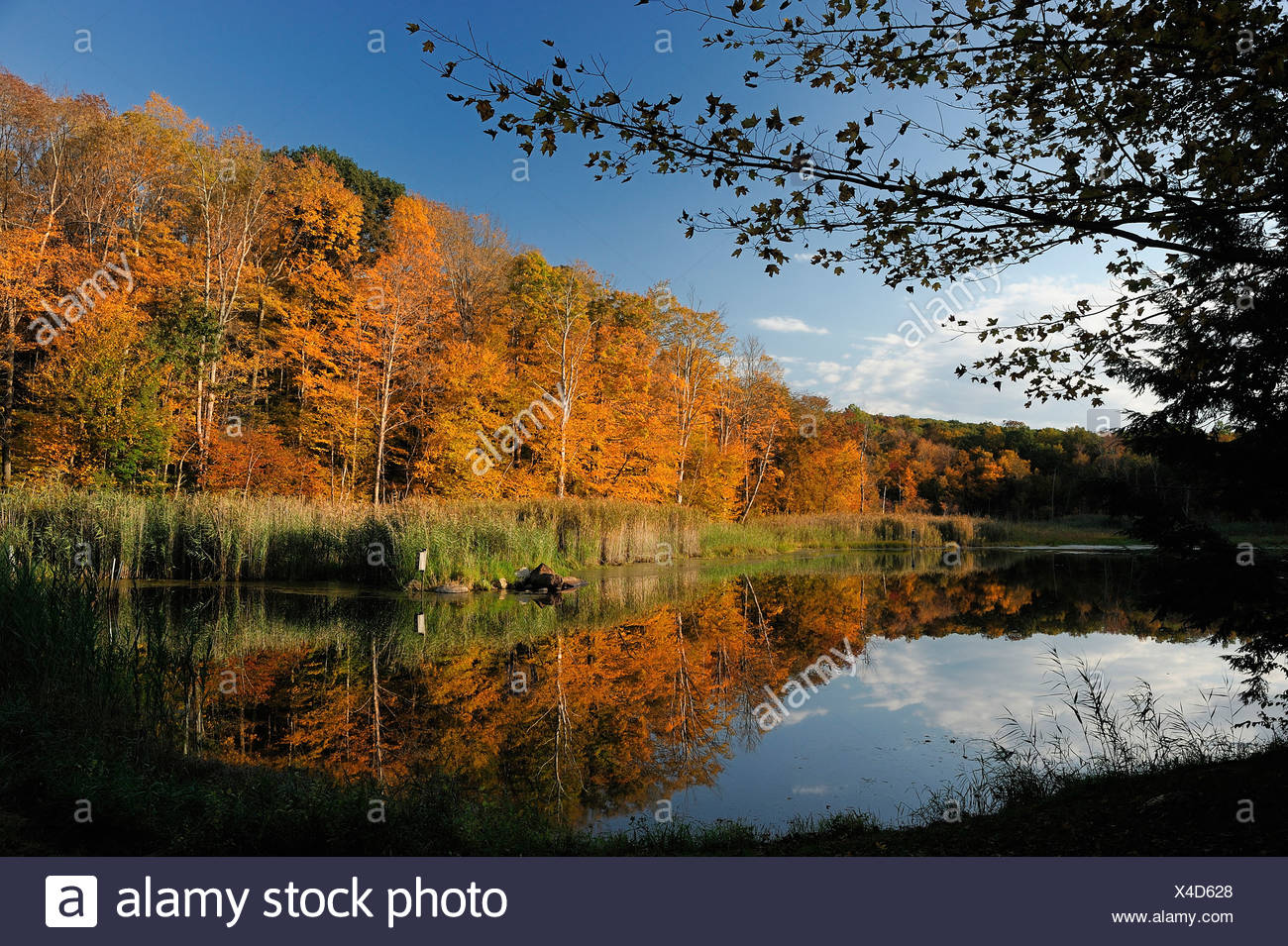 Pond Litchfield Connecticut USA America United States of America fall forest water nature - Stock Image