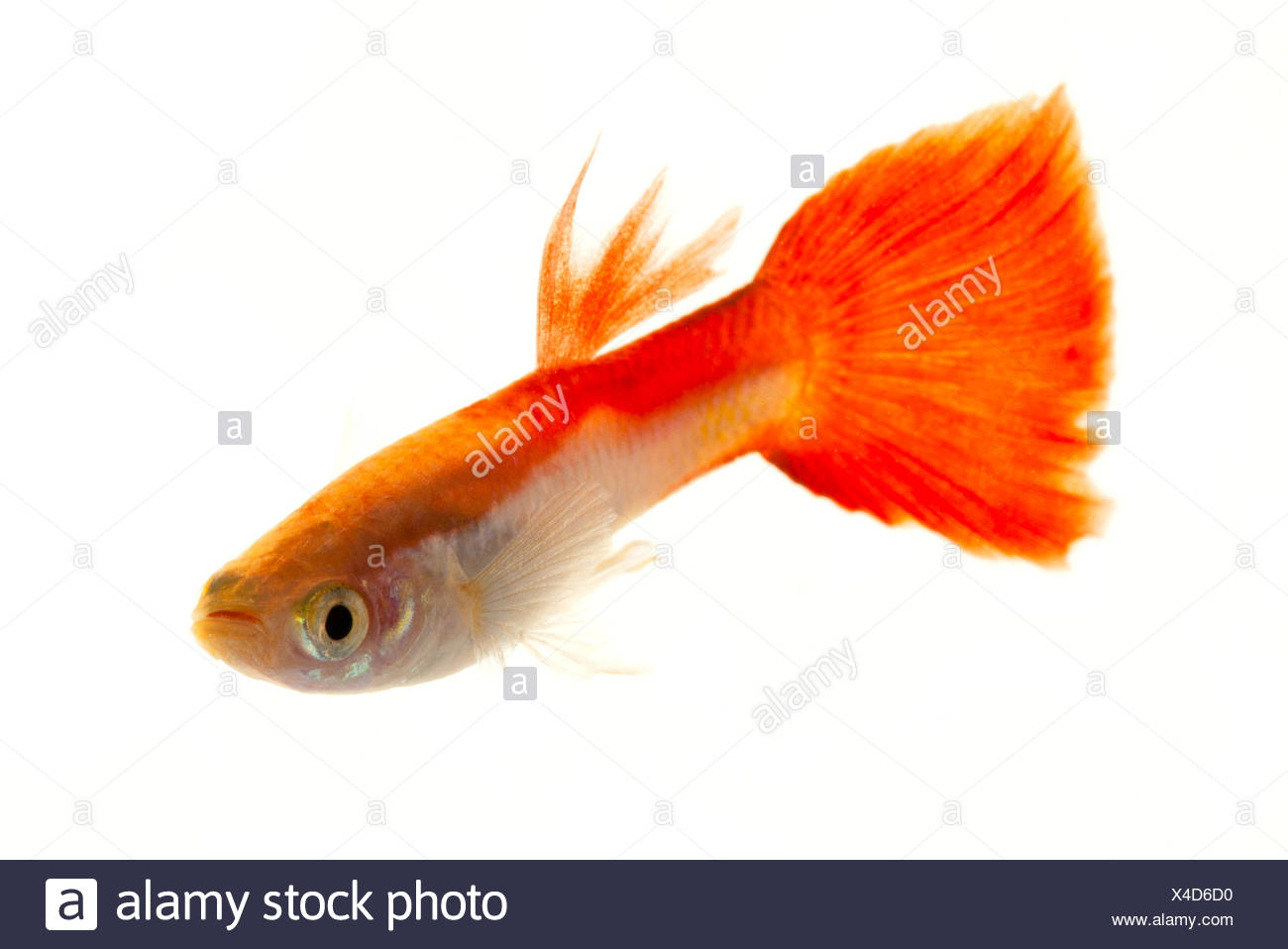 Coloured Fish Cut Out Stock Images & Pictures - Alamy