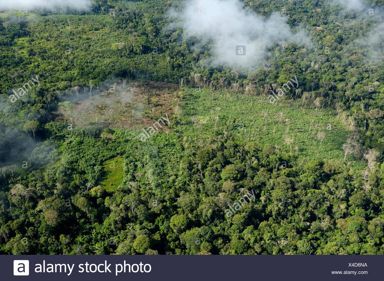 Brazil, Para, Itaituba, Amazon rainforest, slash and burn, reclamation of pastureland - Stock Image