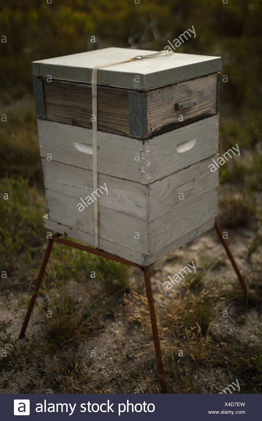 Close-up of beehive at apiary - Stock Image