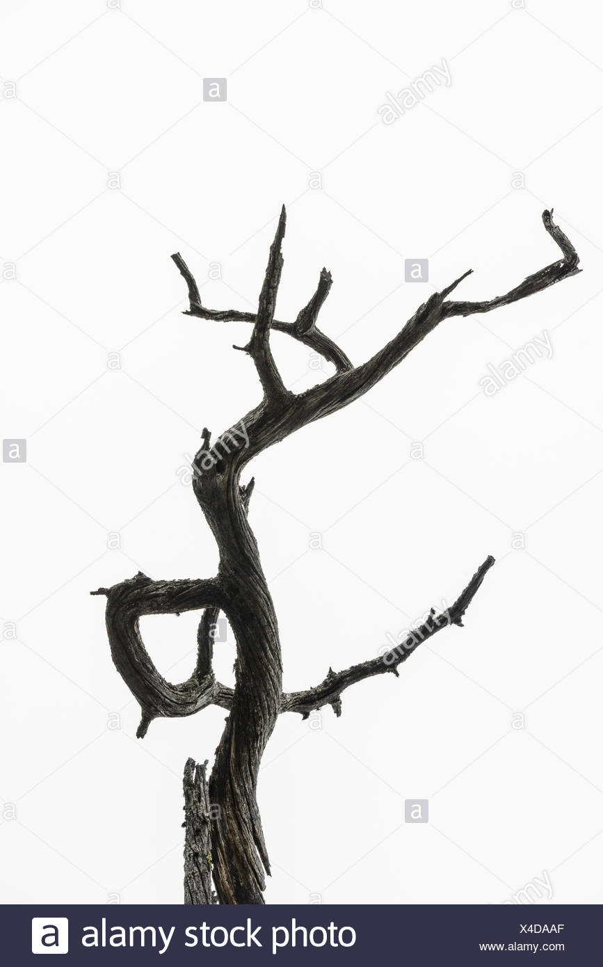 Twisted branch against sky - Stock Image