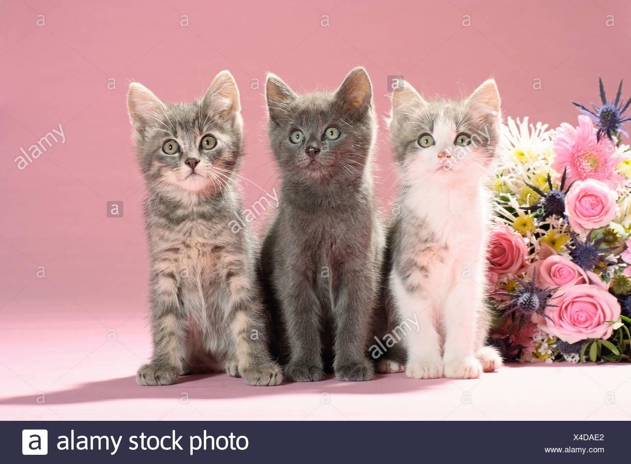 Three Cute Kittens Flowers Stock Photos & Three Cute Kittens Flowers ...