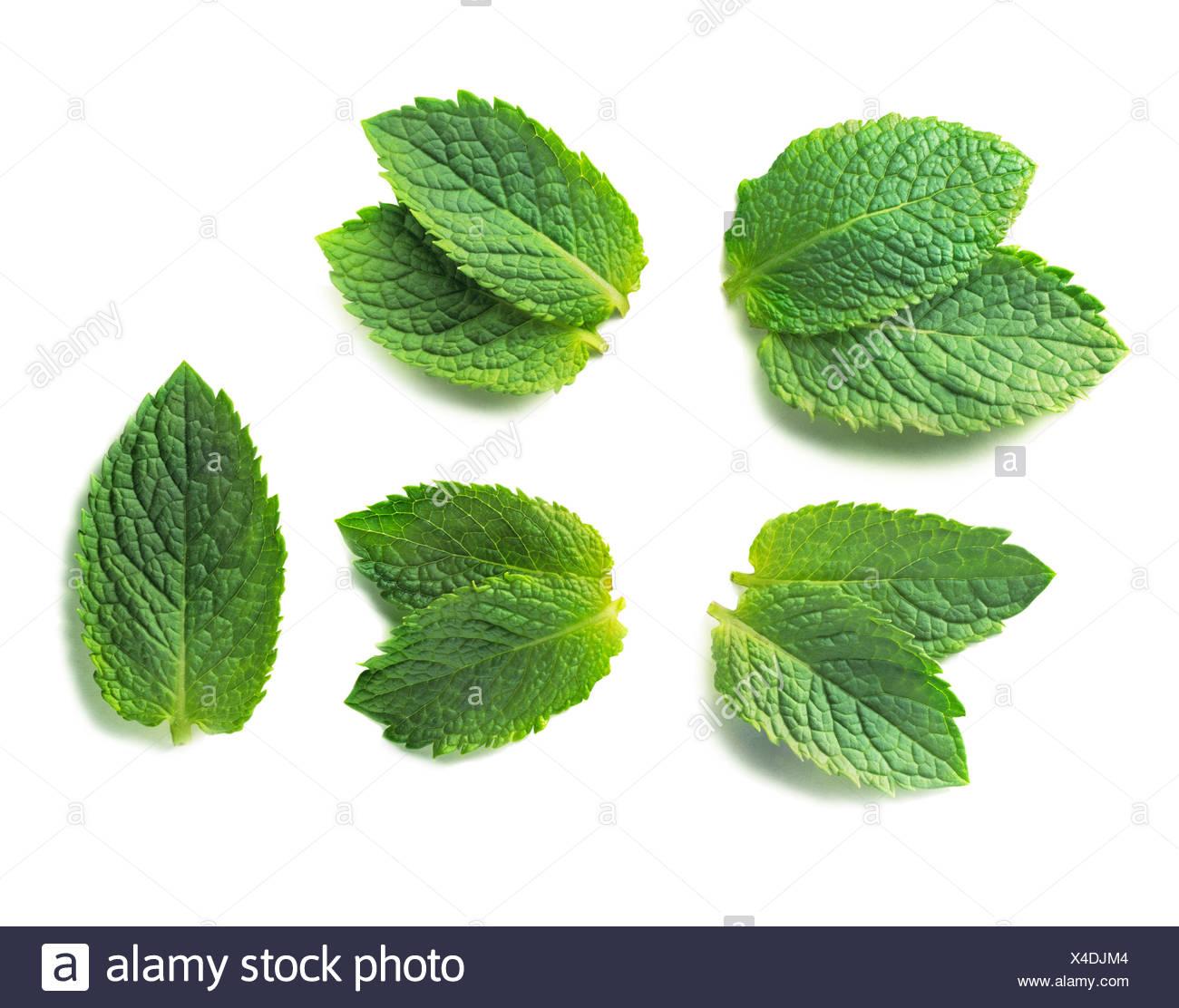 Mentha piperita, Mint, Peppermint - Stock Image