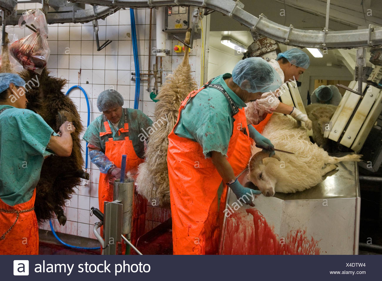 Neqi Slaughterhouse which processes 22,000 Greenland sheep