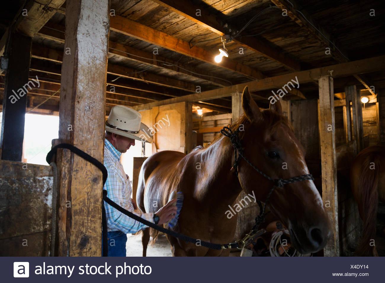 Rancher brushing horse in barn - Stock Image
