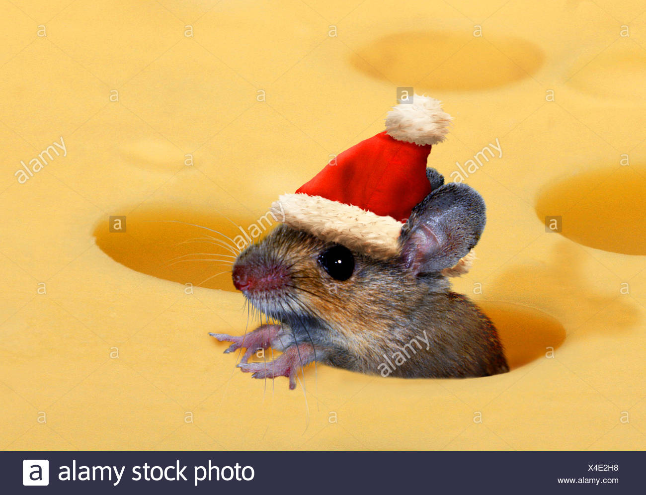 Christmas Mouse.Christmas Mouse With Santa Claus Hat In Cheese Stock Photo