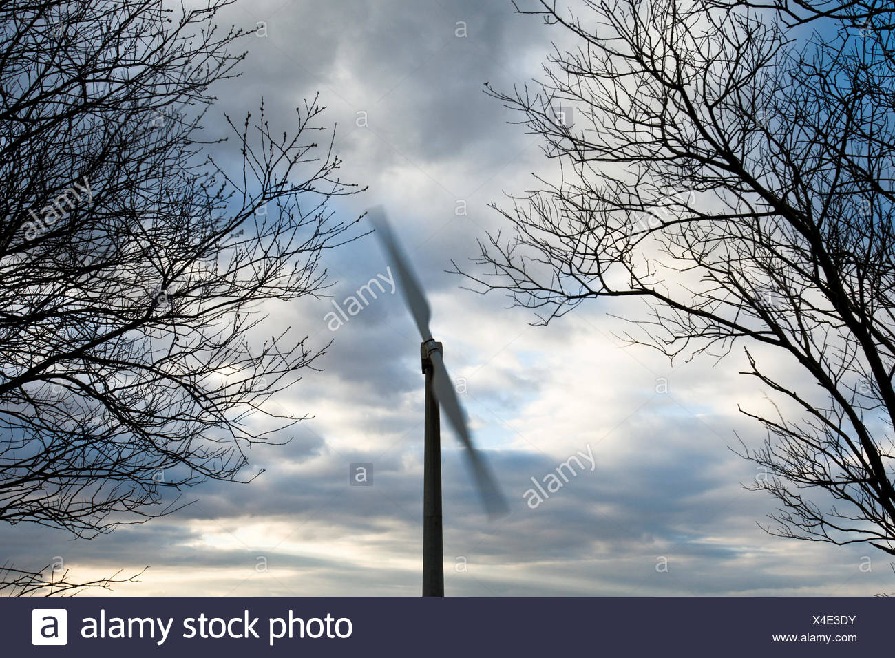 Two bladed wind turbine framed by trees turns in the wind near Delabole, Cornwall in the United Kingdom. - Stock Image