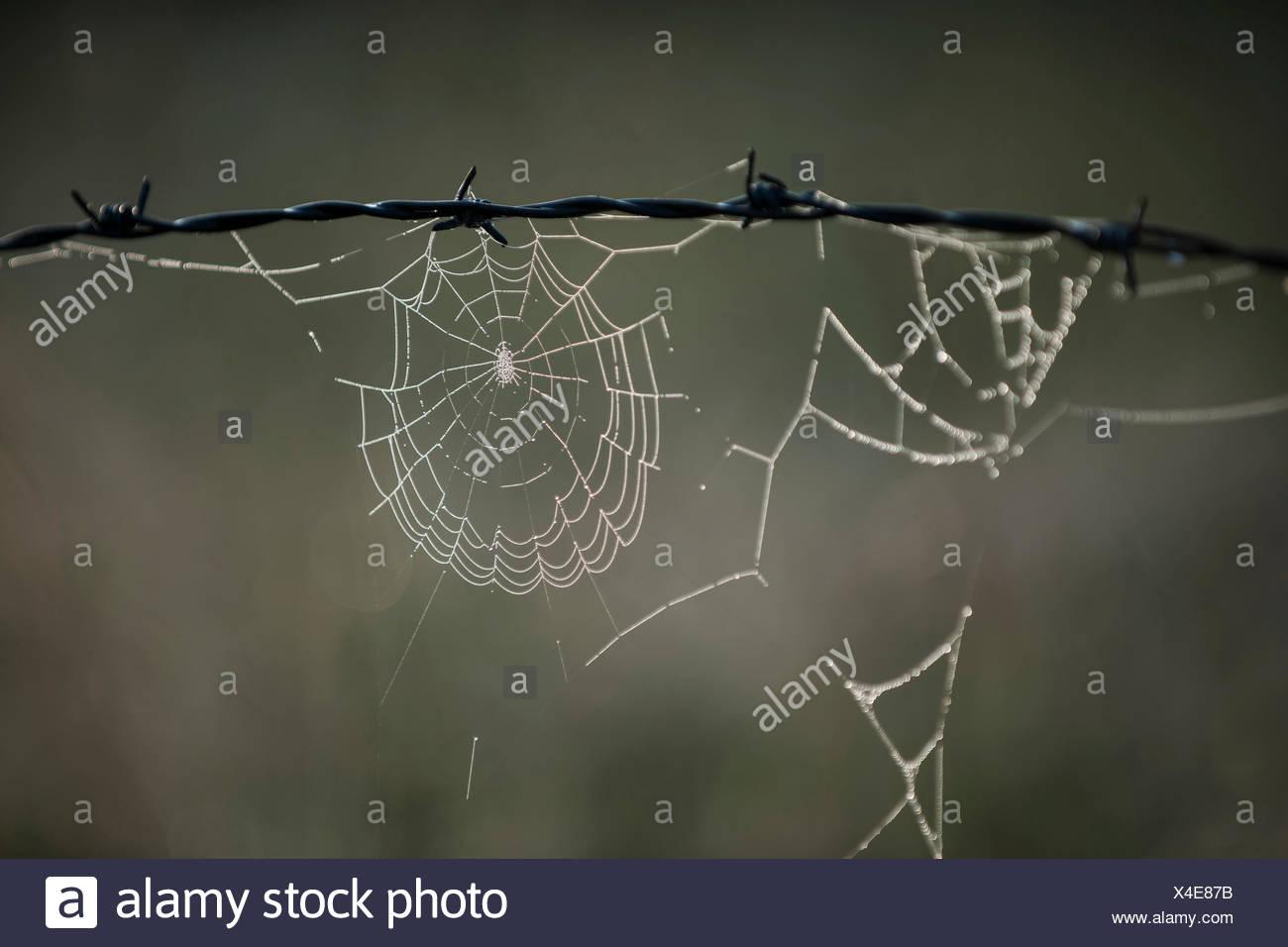 Wire Cobweb Stock Photos & Wire Cobweb Stock Images - Alamy