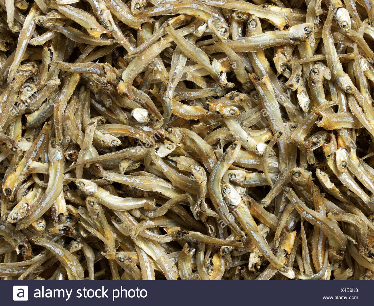 angle fish raw dried preserved anchovy anchovies food aliment colour closeup - Stock Image