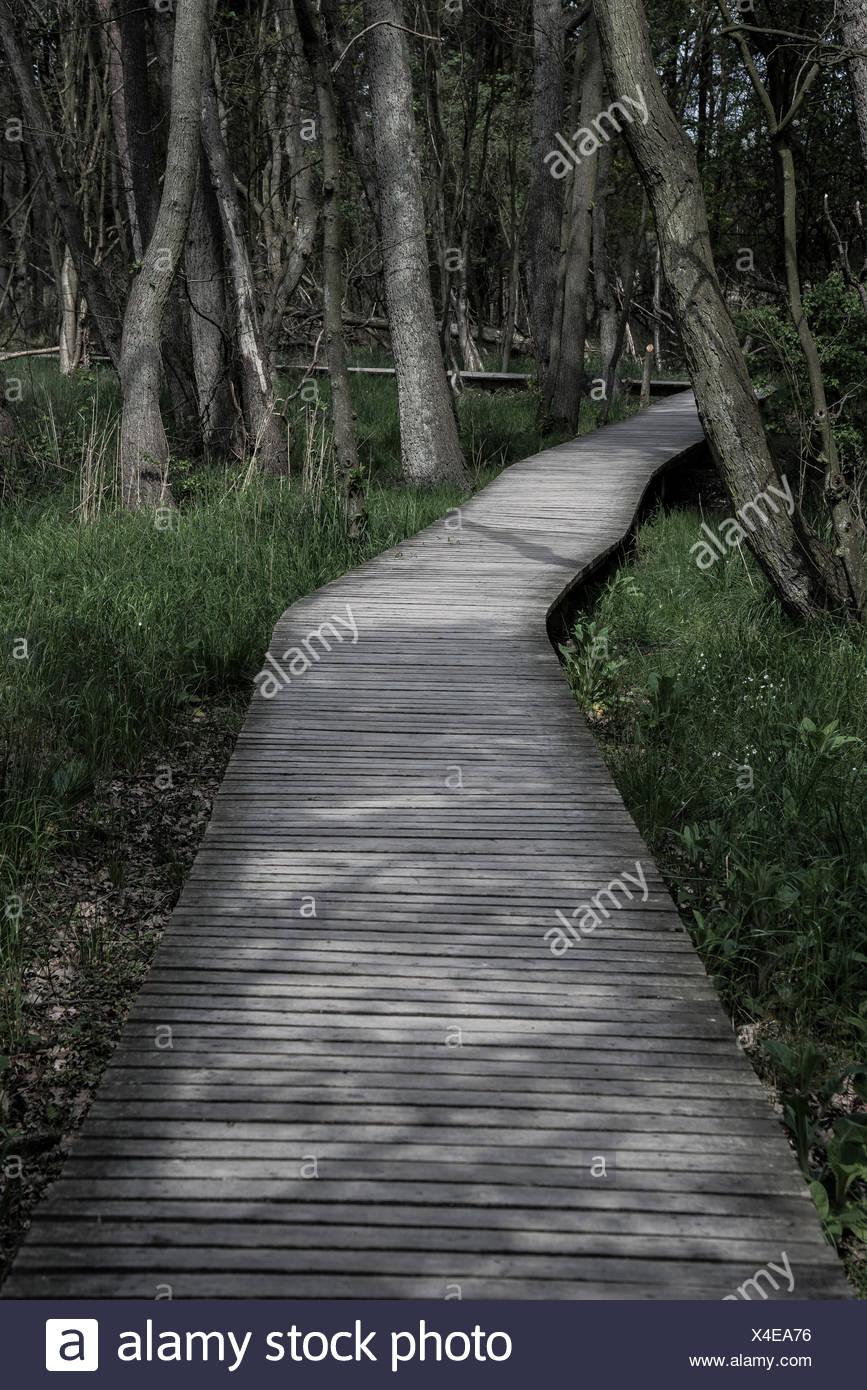 Boardwalk through the forest, Born am Darß, Mecklenburg-Vorpommern, Germany - Stock Image