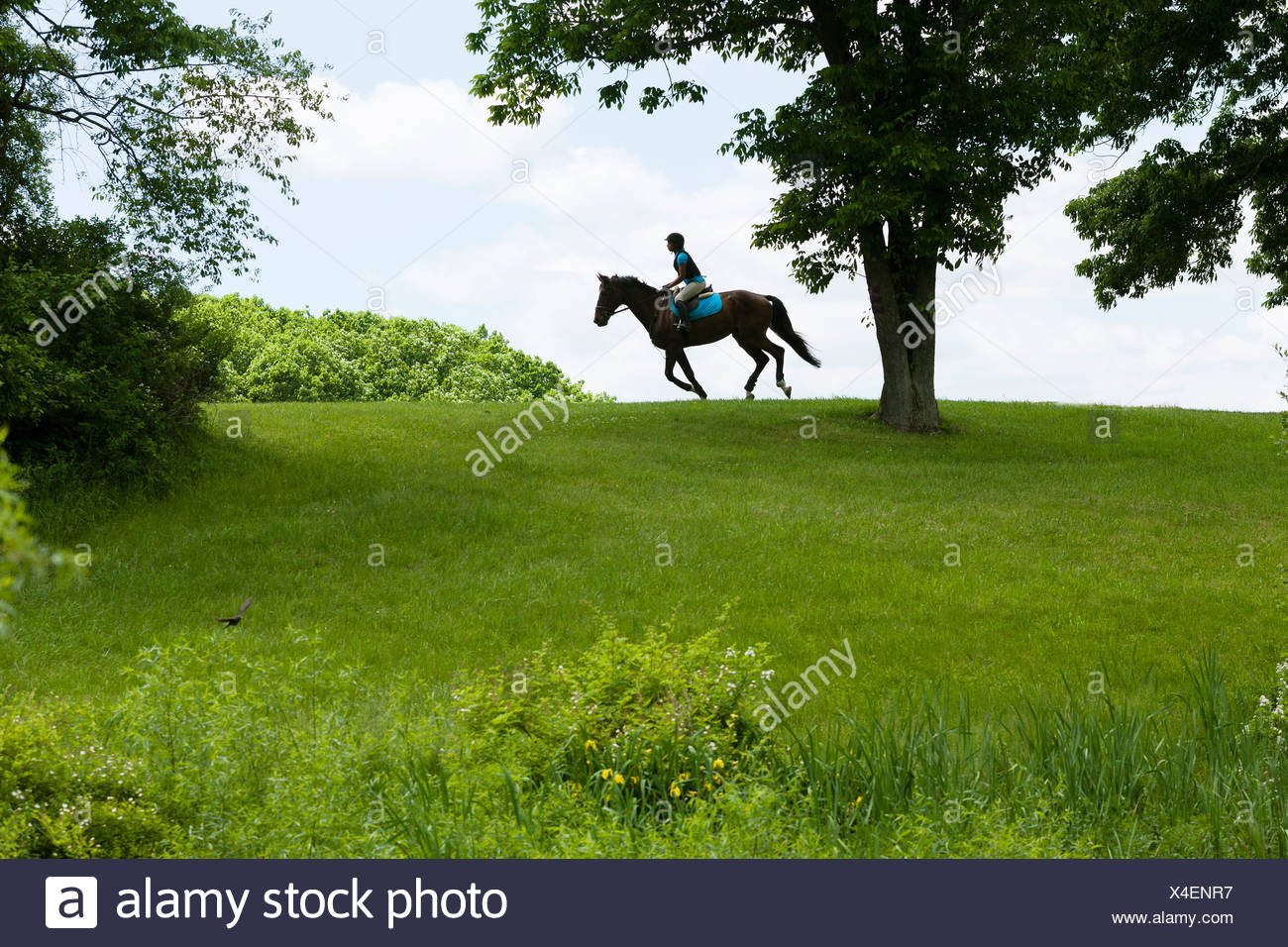 Horse rider riding through field landscape - Stock Image