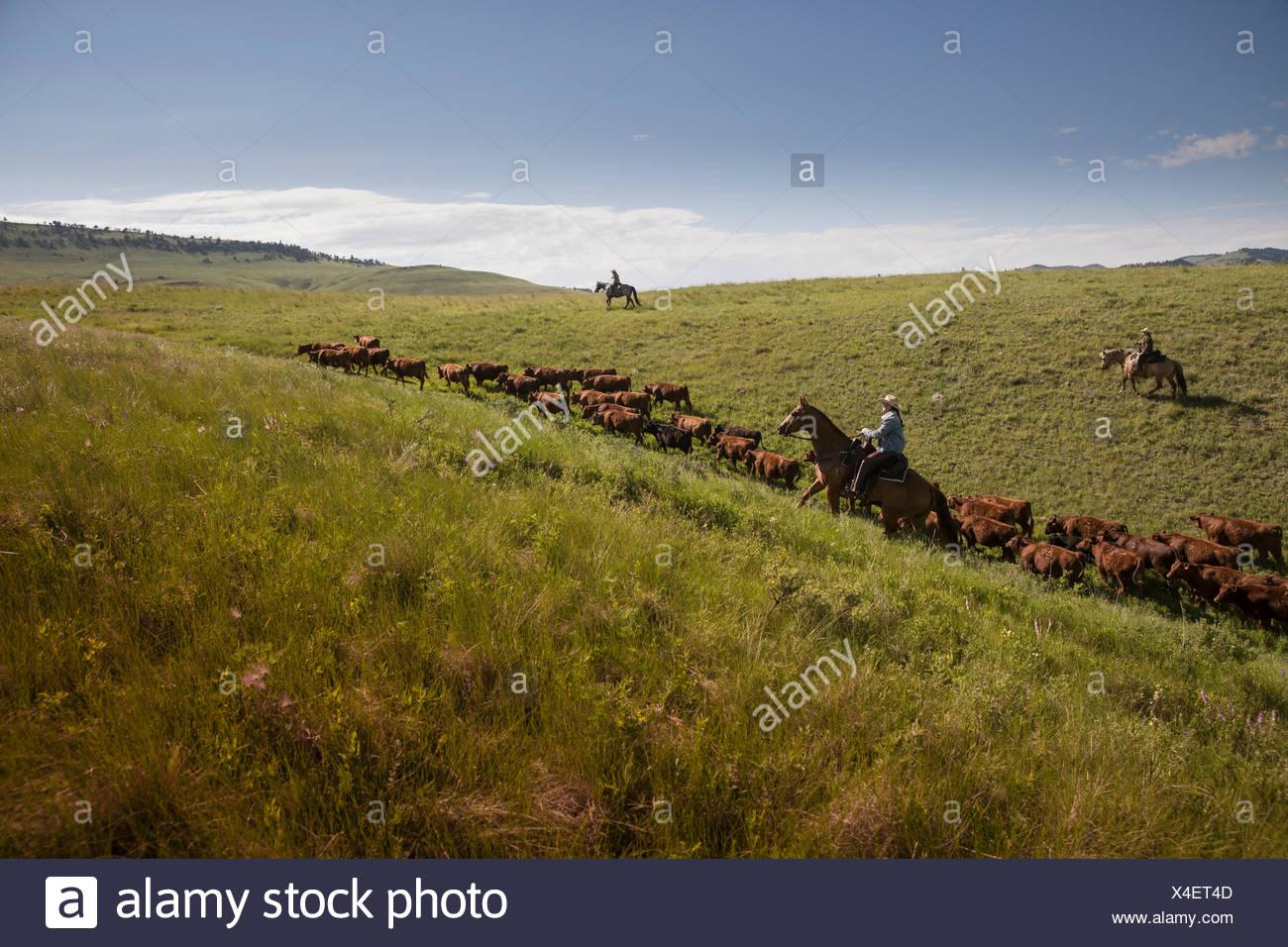 Swingers in hillside new jersey