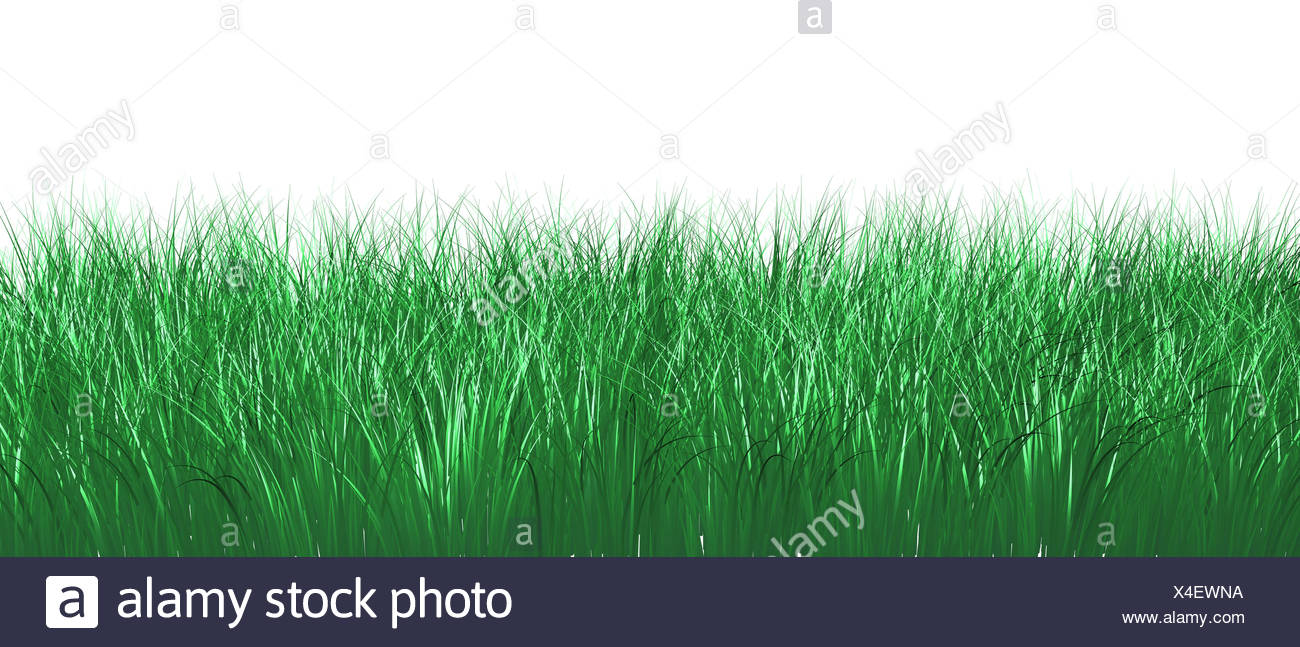 green spring blade of grass - Stock Image