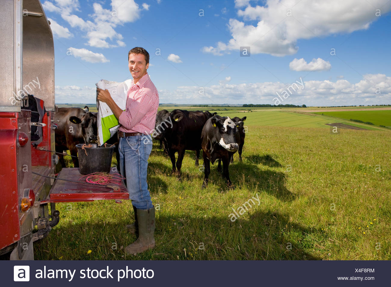 Portrait of farmer preparing feed for cattle on truck bed in sunny rural field - Stock Image