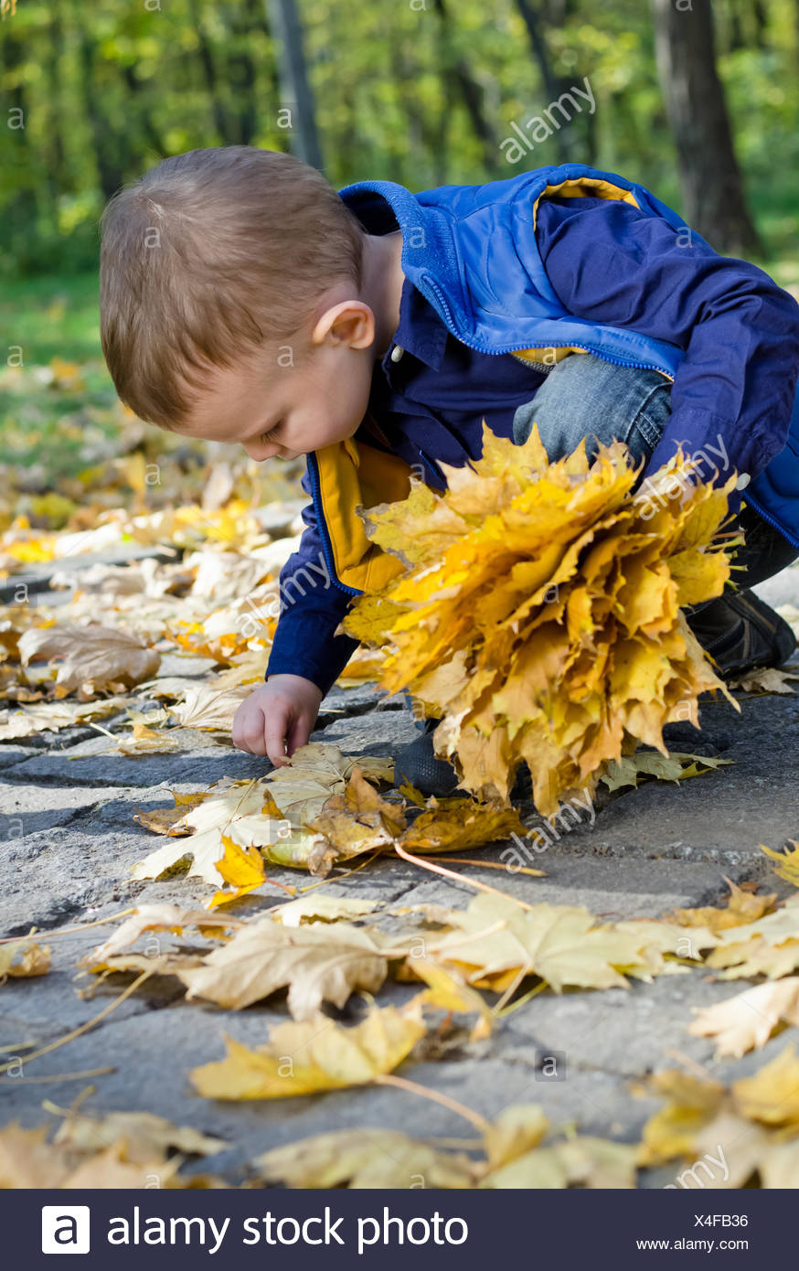 Cute little boy collecting autumn leaves Stock Photo
