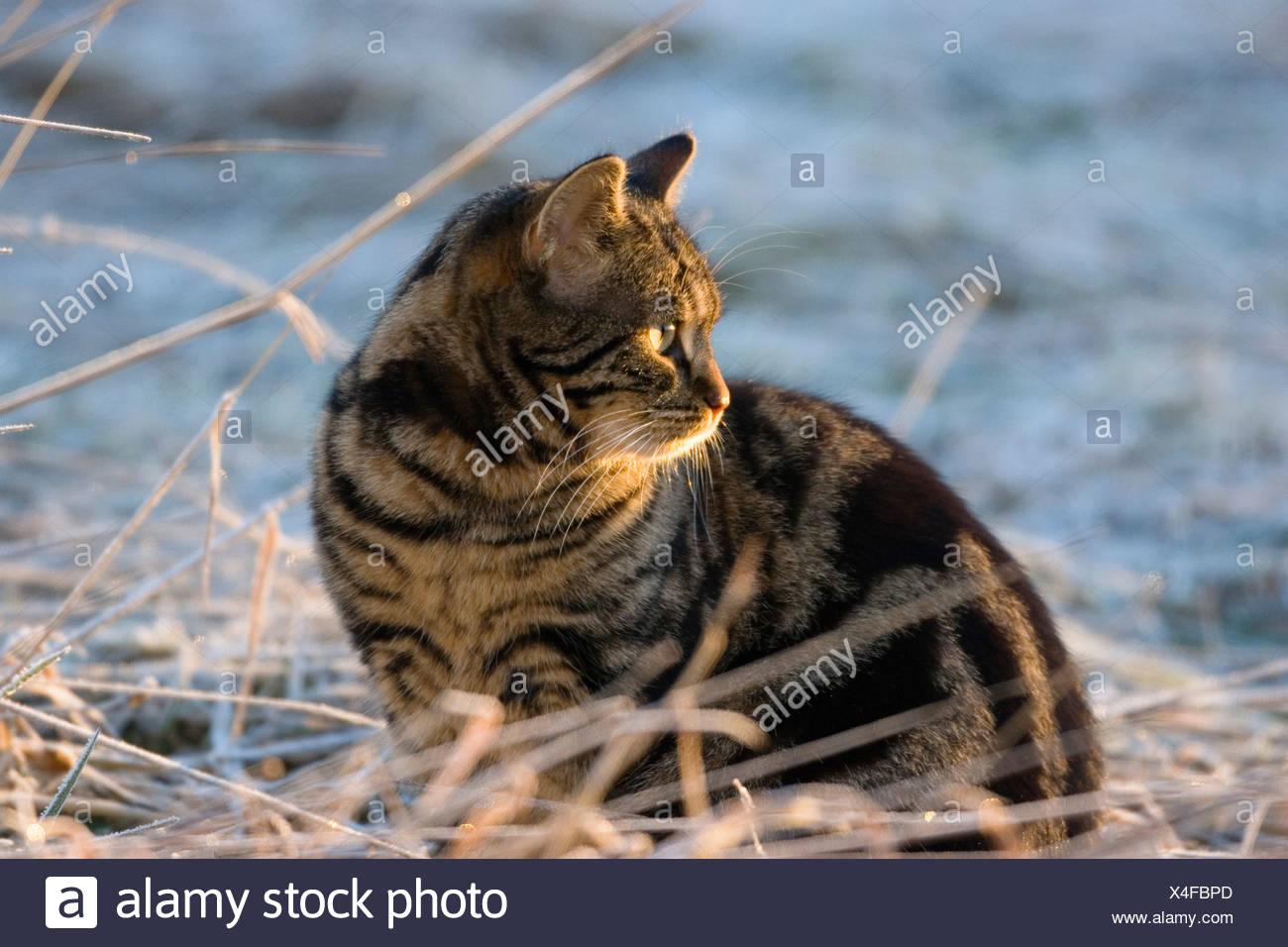 Domestic cat sitting in winter Stock Photo