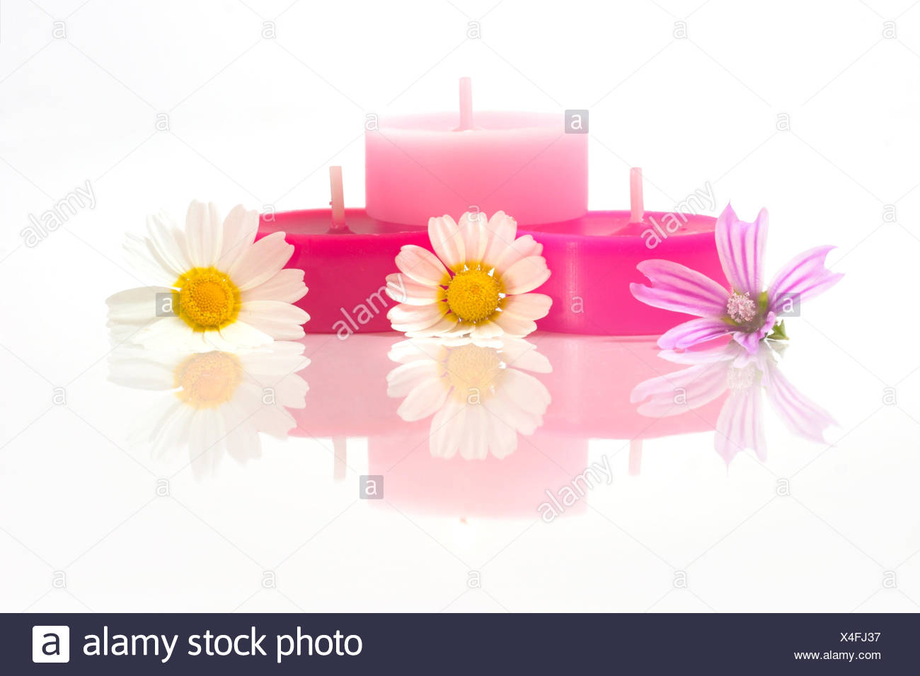 flower flowers plant candles daisy spiritual fragrance bathing
