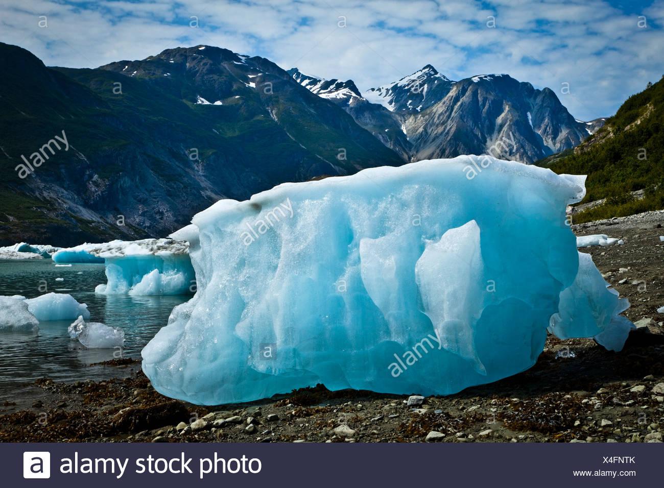 Icebergs from McBride Glacier stranded on shore at low tide, Muir Inlet, Glacier Bay National Park & Preserve, Southeast Alaska - Stock Image