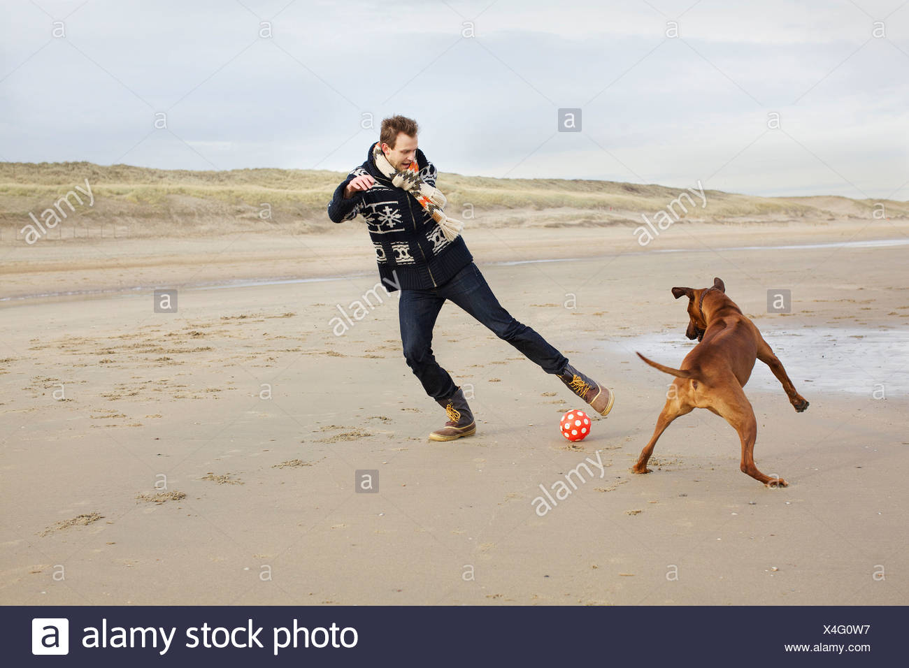 Mid adult man with dog playing football on beach, Bloemendaal aan Zee, Netherlands Stock Photo