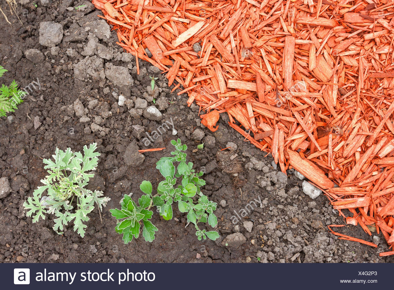 Dirt and mulch Stock Photo
