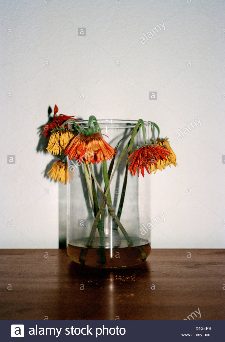 Dead Flowers In Vase Stock Photos Dead Flowers In Vase Stock