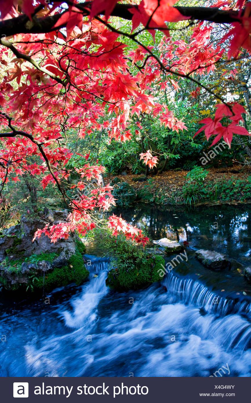 Republic of Ireland, Kildare, flowing stream in Japanese Gardens - Stock Image