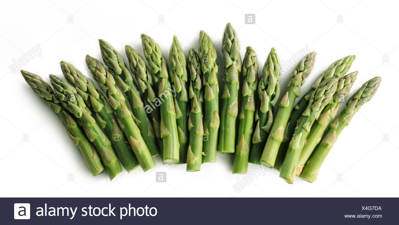 Asparagus officinalis, Asparagus - Stock Image