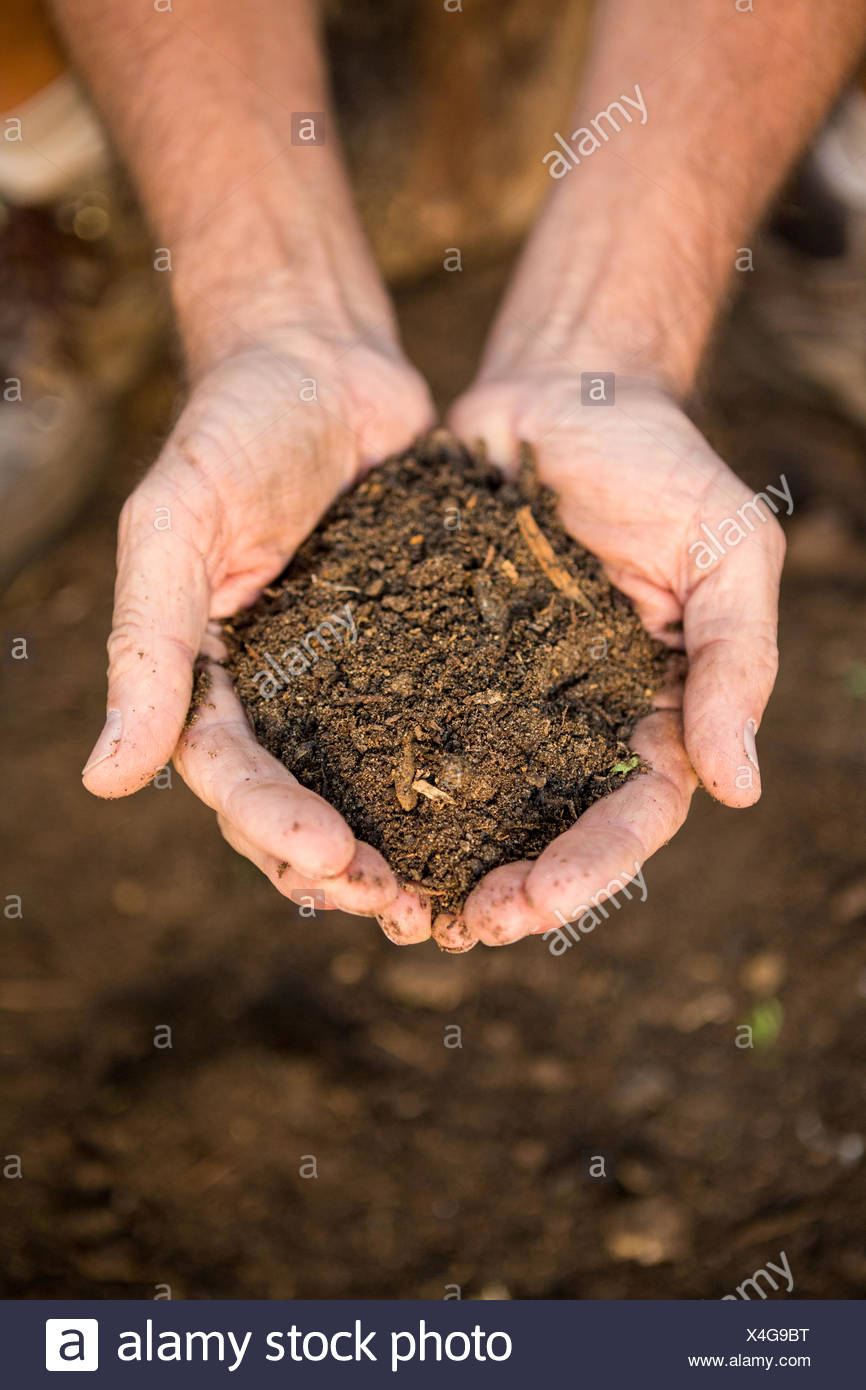 Gardener with dirt in cupped hands at garden - Stock Image