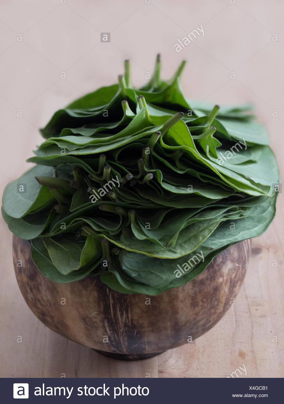 betel leaves - Stock Image