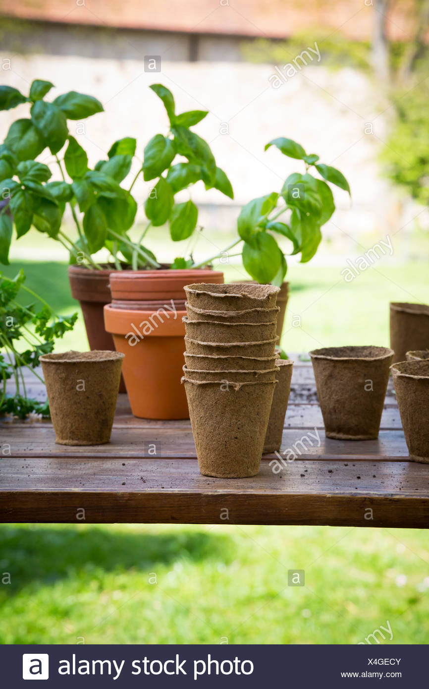Wooden table with flower pots, nursery pots, basil and parsley - Stock Image
