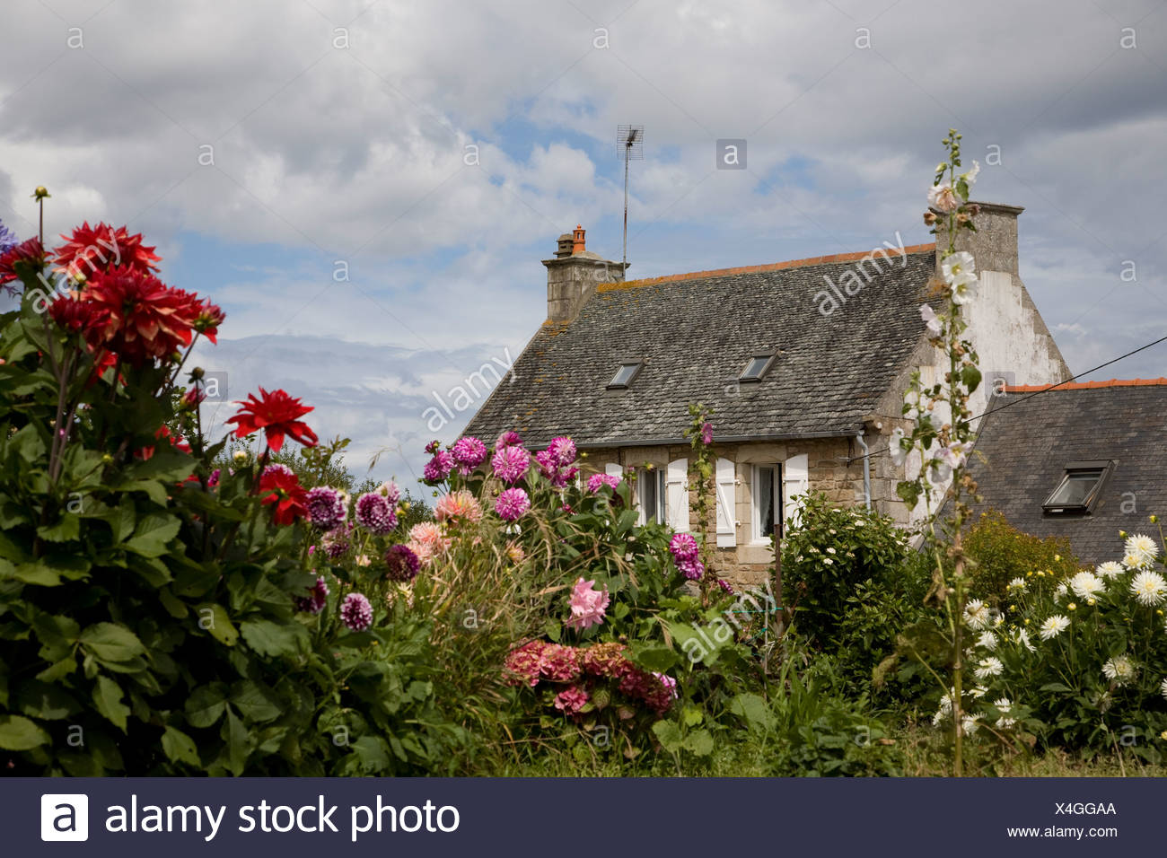 Traditional country house with flowers in foreground - Stock Image