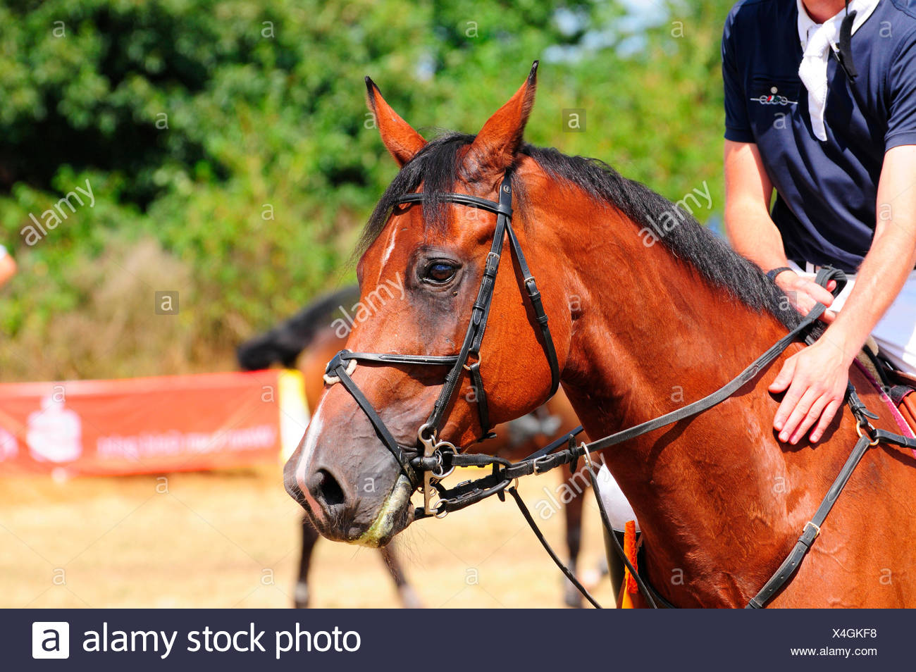Equestrian Sports, rider, bridle, gear, tack - Stock Image