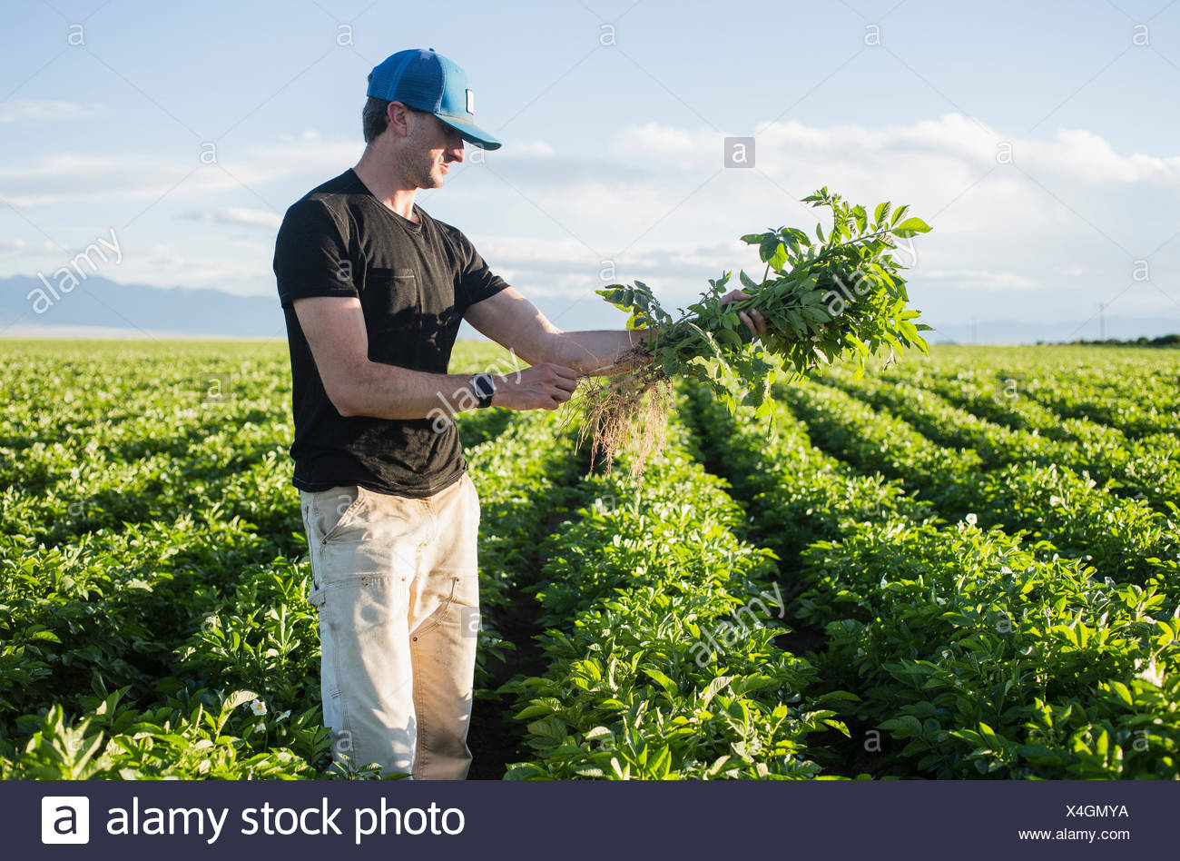 Mature man holding green plant - Stock Image