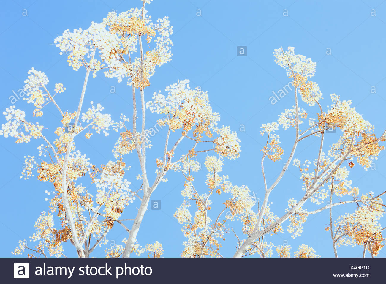 Plant against clear blue sky - Stock Image